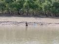 Sundarbans09